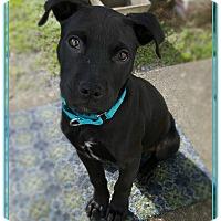 Adopt A Pet :: Ash - Hixson, TN