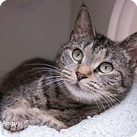 Adopt A Pet :: Angus - Merrifield, VA
