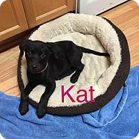 Adopt A Pet :: Kat - Fredericksburg, VA