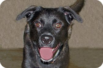 Labrador Retriever Mix Dog for adoption in Ruidoso, New Mexico - Brinkley