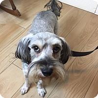 Adopt A Pet :: Ruthie - Redondo Beach, CA