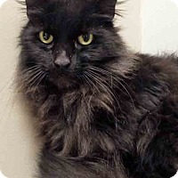 Adopt A Pet :: Elvira - Shorewood, IL