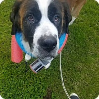 Adopt A Pet :: Ginger - Oswego, IL