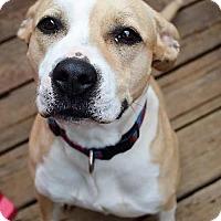 Adopt A Pet :: Annie - Kansas City, MO