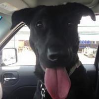 Adopt A Pet :: Kya - Frankfort, IL