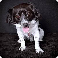 Adopt A Pet :: Pepper - Van Nuys, CA