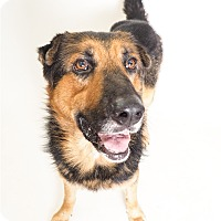 Adopt A Pet :: Handsome - Phoenix, AZ