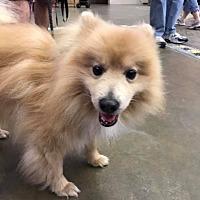 Adopt A Pet :: Cooper - Norman, OK