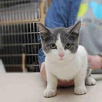 Adopt A Pet :: STANTON - Pittsburgh, PA