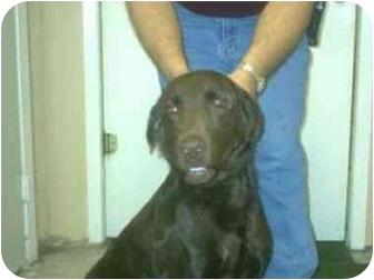 Retriever (Unknown Type) Mix Dog for adoption in Aledo, Illinois - Coco