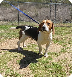 Beagle Mix Dog for adoption in LaGrange, Georgia - Sim