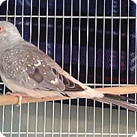 Adopt A Pet :: Mary - Lenexa, KS