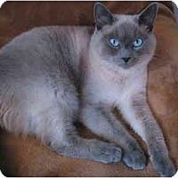 Adopt A Pet :: Duncan - Portland, OR