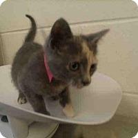 Adopt A Pet :: Jamie (& Desoto) - Arlington, VA