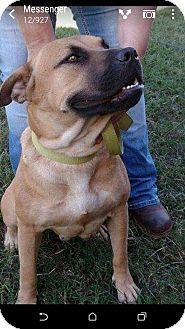 Black Mouth Cur Mix Dog for adoption in Camilla, Georgia - Honey