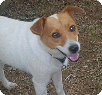 Terrier (Unknown Type, Medium) Mix Dog for adoption in Conway, Arkansas - Docker