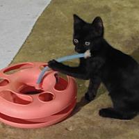 Adopt A Pet :: Pandora - Houston, TX