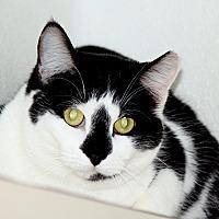 Adopt A Pet :: Oreo $50 adoption - Union Lake, MI