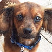 Adopt A Pet :: Roux Remoulade - Houston, TX