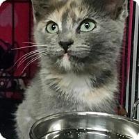 Adopt A Pet :: mina - San Jose, CA