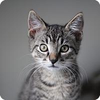 Adopt A Pet :: Chessie - Richmond, VA