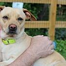 Adopt A Pet :: Marissa