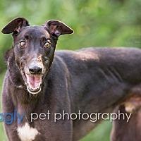 Adopt A Pet :: Blackie - Dallas, TX