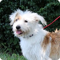Adopt A Pet :: Bopsy~adopted! - Glastonbury, CT