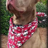 Adopt A Pet :: Hampton - Irmo, SC