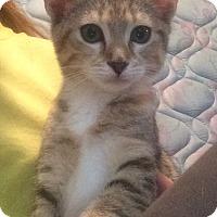 Adopt A Pet :: Nala - Homewood, AL