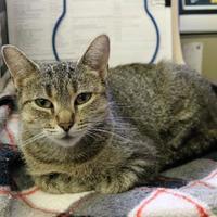 Adopt A Pet :: Imelda - Ann Arbor, MI