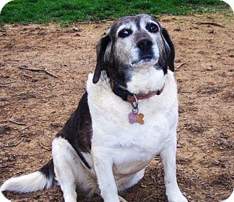 Beagle Mix Dog for adoption in Wilmington, Delaware - Hallie