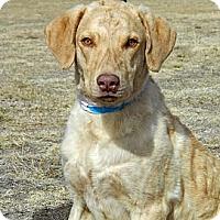 Adopt A Pet :: Bro - Cheyenne, WY