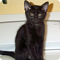 Adopt A Pet :: Paris - Orlando, FL