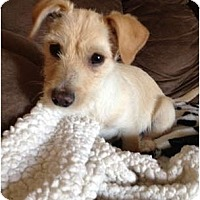 Adopt A Pet :: Tammy - Oceanside, CA