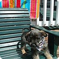 Adopt A Pet :: Tucker - Crystal River, FL