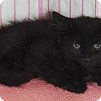 Adopt A Pet :: Cinder - Chandler, AZ