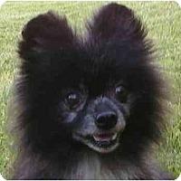 Adopt A Pet :: Miggit - Gum Spring, VA