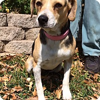 Adopt A Pet :: Betsy - San Antonio, TX