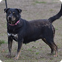 Adopt A Pet :: Missy - Lebanon, MO