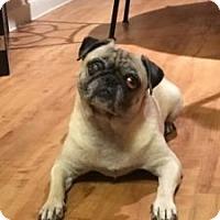 Adopt A Pet :: PopTart - Austin, TX