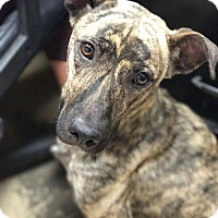 Adopt A Pet :: envy - Marion, IN