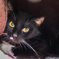 Adopt A Pet :: Tux - Oromocto, NB