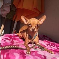 Adopt A Pet :: KRISSY - Elk Grove, CA