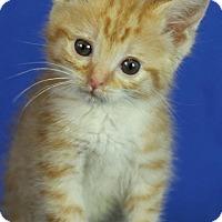 Adopt A Pet :: Purple Jenkins - Winston-Salem, NC