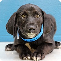 Adopt A Pet :: Hurley - Waldorf, MD