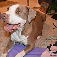 Adopt A Pet :: SIRI - Hurricane, UT