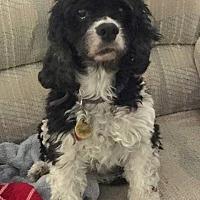 Adopt A Pet :: Sophie - Santa Barbara, CA