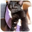 Photo 3 - Domestic Shorthair Kitten for adoption in Cedar Creek, Texas - Autry
