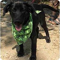 Adopt A Pet :: Bella Linda - Cumming, GA